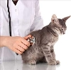 Ветеринарные клиники в Сюмси